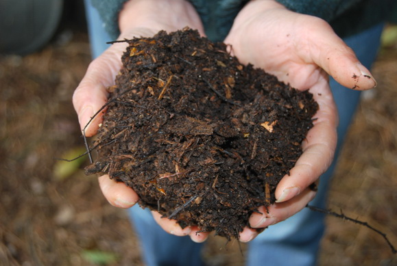 Great compost