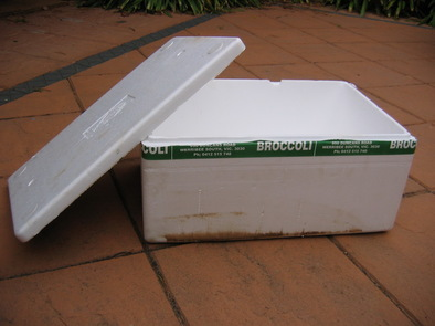 broccoli_box_mgg.jpg